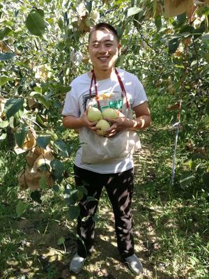 陕西渭南蒲城酥梨 75mm以上 200-250g