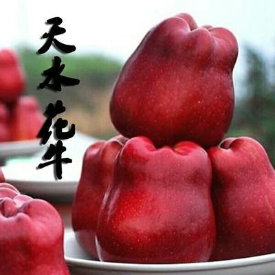 甘肃省天水市甘谷县红蛇果 200-300克