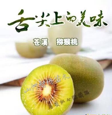 四川广元红心猕猴桃苗 嫁接苗 红阳猕猴桃苗