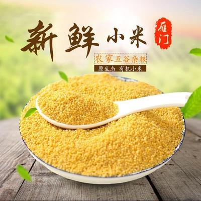 山西忻州晋谷21号 黄小米月子小米刚产的新小米金黄有米油