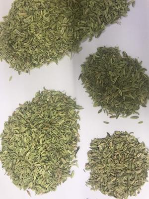 北京北京小茴香