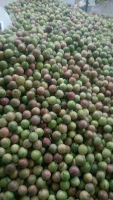 广西玉林紫红色百香果 60 - 70克
