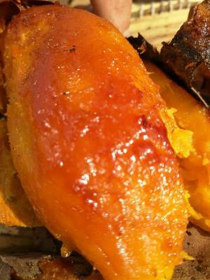 这是一张关于烟薯25 3两以上 红皮的产品图片