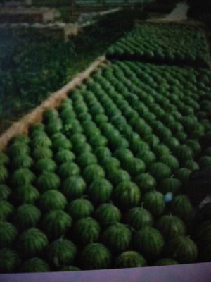 吉林松原地雷瓜 10斤打底 9成熟 2茬 有籽