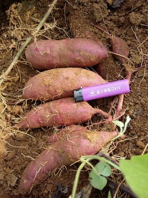 湖南永州越南番薯 3两以上 紫皮