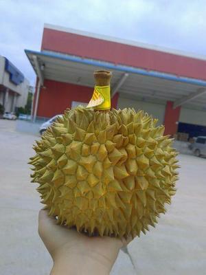 云南昆明泰国榴莲 3 - 4公斤 90%以上