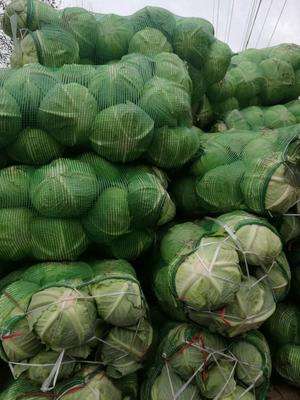 湖南岳阳卷心包菜 4~5斤