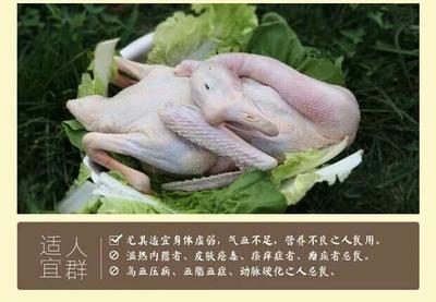 江苏省宿迁市沭阳县鹅肉类 新鲜