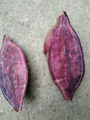 河南驻马店紫薯粉