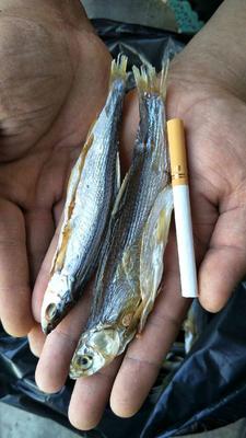 河南郑州鱼干类 6-12个月
