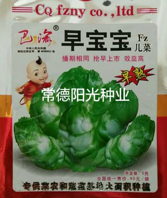 湖南省常德市鼎城区早熟儿菜种子 种子