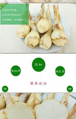 江苏盐城白肉慈菇 20~30g