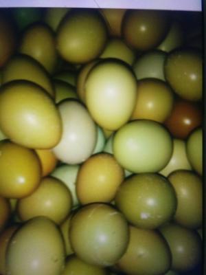 这是一张关于七彩山鸡蛋 箱装 食用的产品图片