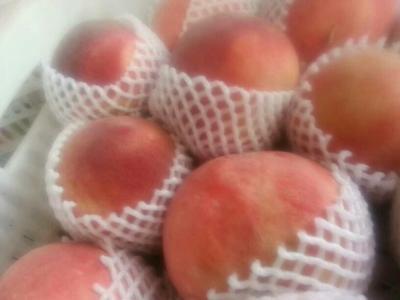 河北衡水蜜桃 80mm以上 4两以上
