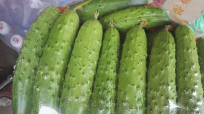 河北秦皇岛小黄瓜 18~22cm 鲜花带刺