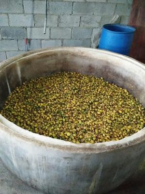 贵州毕节刺梨酒 40-49度 5年以上