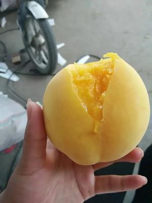 陕西宝鸡黄桃 80mm以上 4两以上