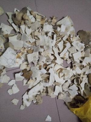 广东省广州市番禺区龟甲