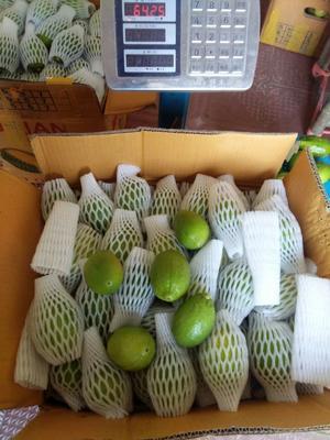 广东阳江香水柠檬 2.7 - 3.2两
