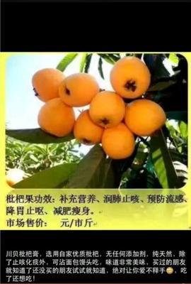 福建漳州云霄县枇杷膏