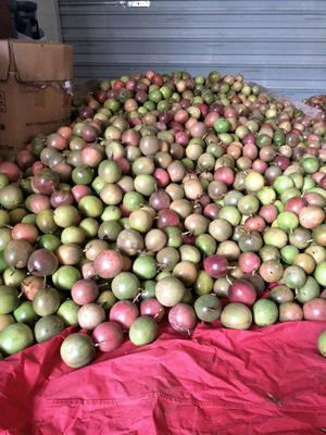 广西桂林紫色百香果 70 - 80克
