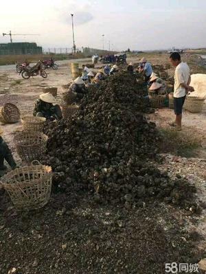 这是一张关于湛江牡蛎 人工殖养 3-5只/龙8国际官网官方网站 湛江生蚝批发一手货源的产品图片