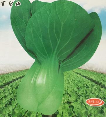 北京海淀区油菜籽种子