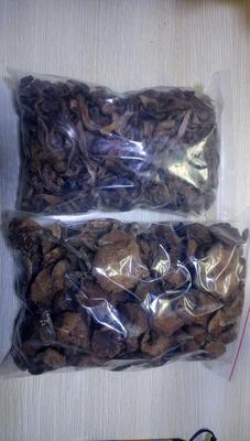 河北廊坊蘑菇