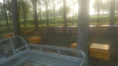 安徽宿州杉木蜂箱