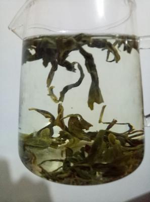 这是一张关于海青绿茶 袋装的产品图片