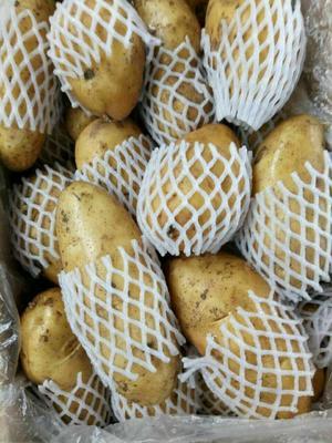 这是一张关于荷兰15号土豆 2~4两的产品图片