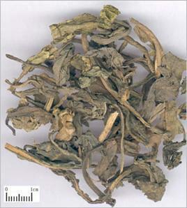 这是一张关于大青叶的产品图片
