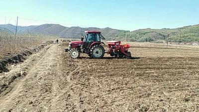 吉林通化玉米干粮 净货 水份20%-30% 霉变≤1%