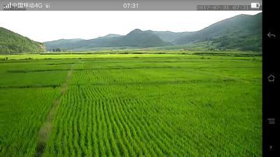 吉林通化稻谷 晚稻