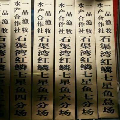 广西钦州月鳢 人工养殖 0.5龙8国际官网官方网站以下