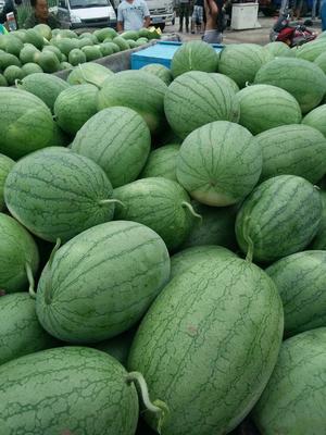黑龙江牡丹江特小凤西瓜 3斤打底 8成熟 1茬 有籽