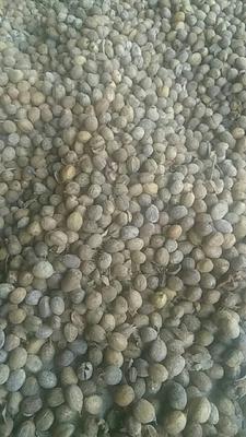 四川省宜宾市翠屏区巴豆