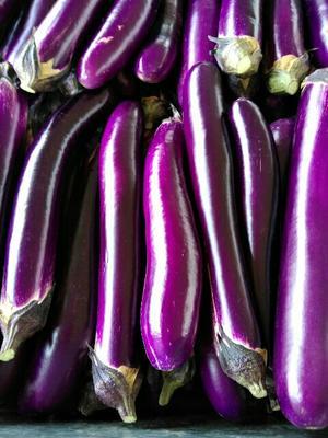 河南焦作紫长茄 4两以上