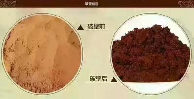 吉林白山灵芝孢子粉