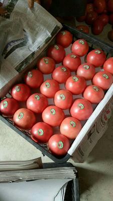 这是一张关于大红硬果 大红 弧三以上 不打冷的产品图片