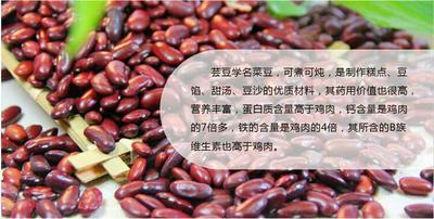 陕西榆林红芸豆