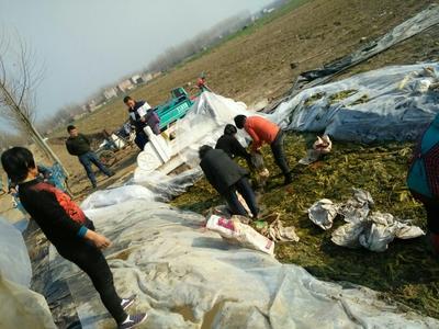 安徽亳州雪菜泡菜