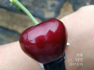 辽宁大连美早樱桃 28-30mm