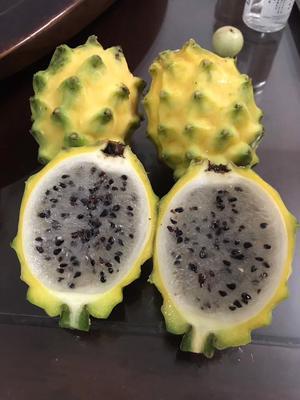 这是一张关于厄瓜多尔黄龙苗的产品图片