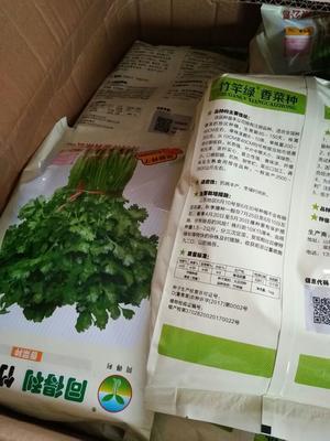 山东省聊城市东昌府区香菜种子