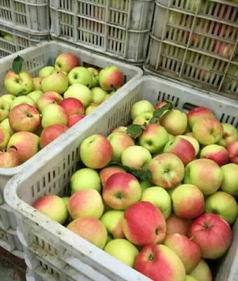 这是一张关于嘎啦苹果 70 - 75mm 日晒面 膜袋的产品图片