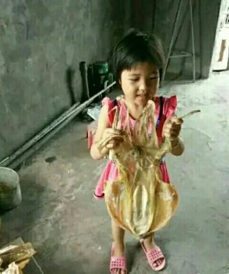 福建漳州东山县深海墨鱼干
