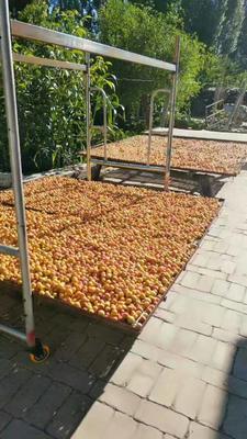 新疆伊犁树上干杏 30-40mm