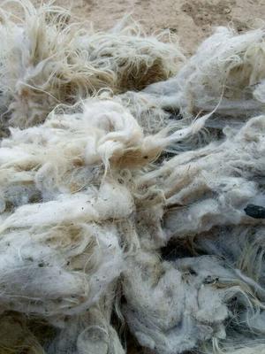 甘肃定西羊毛