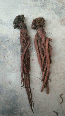 这是一张关于丹参的产品图片